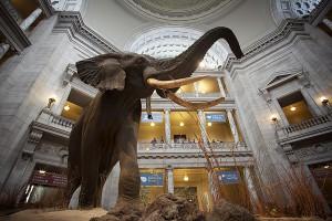 natural-history-elephant-close